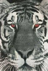 Modern Approx 8x5ft 160x230cm Tiger Face Rug Great Bargain Black/Grey Red eyes!.