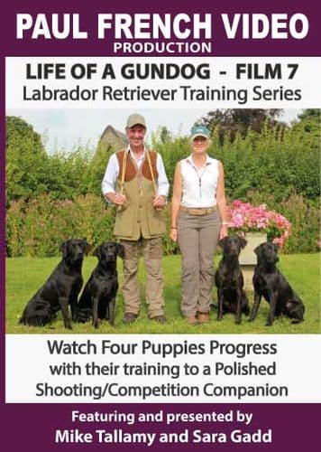 Life of a Gundog - Film 7 - Labrador Retriever Training Series