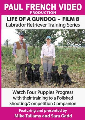 Life of a Gundog - Film 8 - Labrador Retriever Training Series