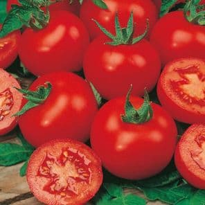 TOMATE FOURNAISE moins cher !
