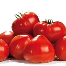 TOMATE GOURMANDIA GREFFEE