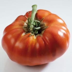 TOMATE RUSSE ROUGE PLANT HORTI SOLOGNE