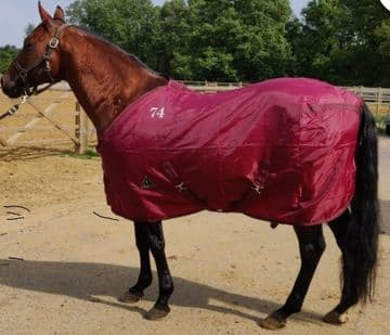 QH Closed Front Nylon Stable Sheet - Black or Burgundy